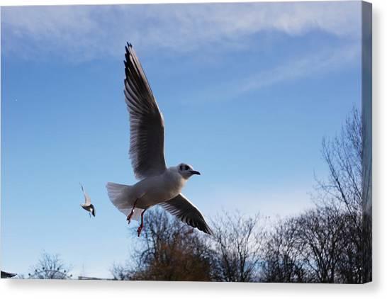Hyde Park Canvas Print - The Bird by Jimmy Duarte Silva