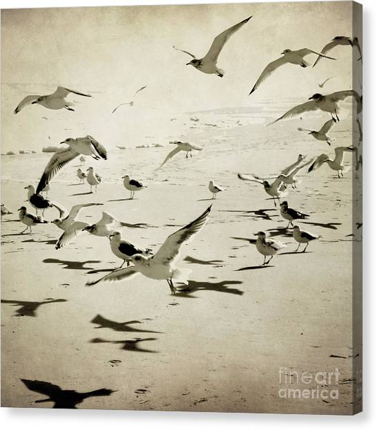 The Birds Canvas Print by Sharon Kalstek-Coty