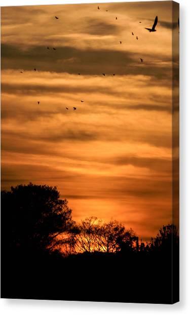 The Birds Still Fly Canvas Print by Christy Usilton