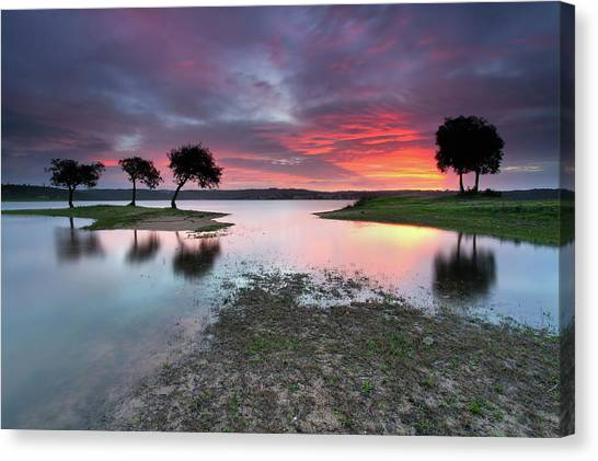 Verde Canvas Print - The Blessing Of The Sun by Rui David