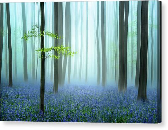 Tree Trunks Canvas Print - The Blue Forest ........ by Piet Haaksma