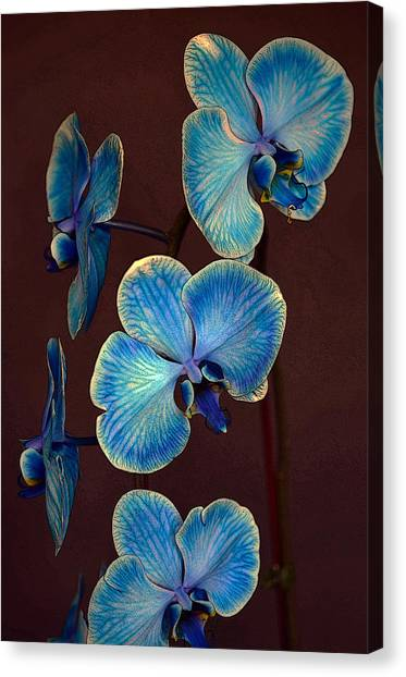 The Blue Orchid Canvas Print