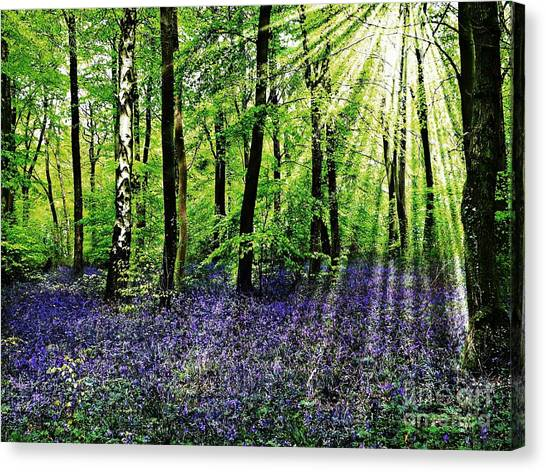 The Bluebell Woods Canvas Print