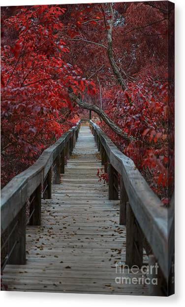 The Nature Center Canvas Print - The Boardwalk by Douglas Barnard