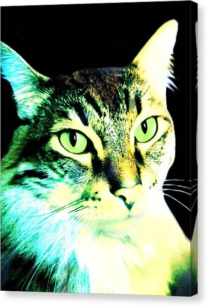 Main Coons Canvas Print - The Boss by Cindy Edwards