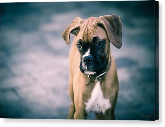 Boxer Dog Canvas Print - The Boxer by Karen Varnas