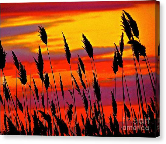 The Breeze Canvas Print by Q's House of Art ArtandFinePhotography