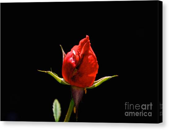 The Bud Canvas Print
