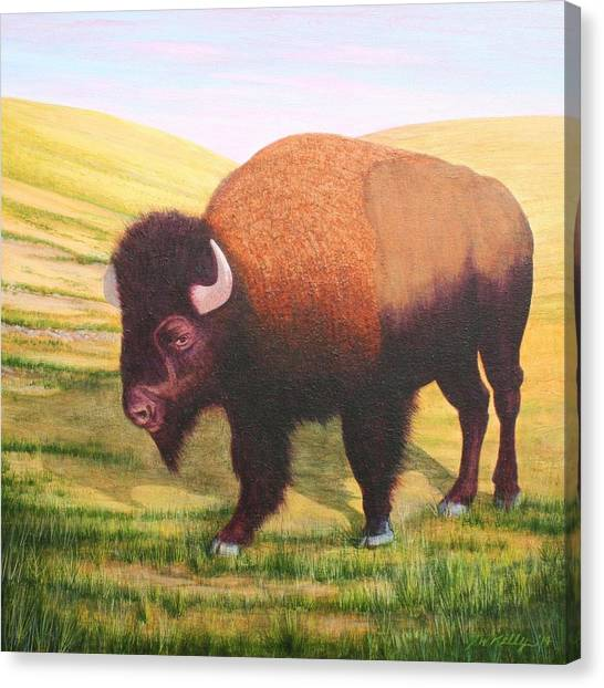The Buffalo Canvas Print by J W Kelly