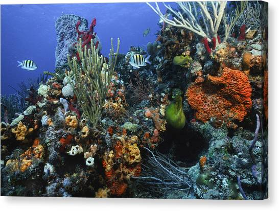 The Busy Reef Canvas Print