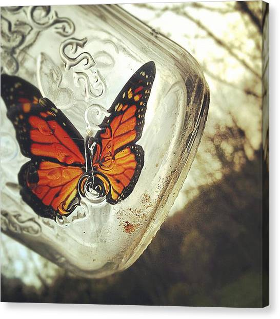 Insects Canvas Print - The Butterfly by Carrie Ann Grippo-Pike