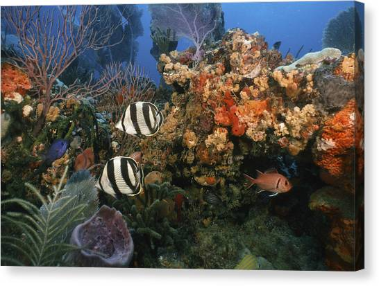The Butterflyfish On Reef Canvas Print