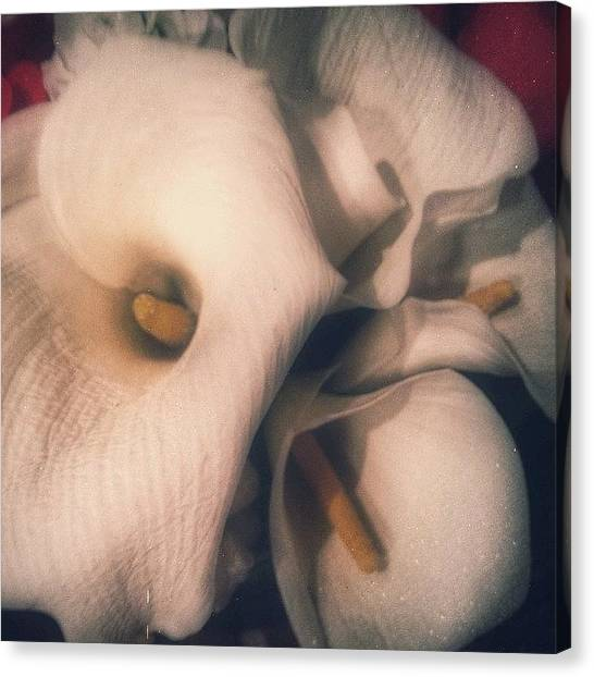 Erotic Canvas Print - The Calla Lilies Are In Bloom by Christi Evans