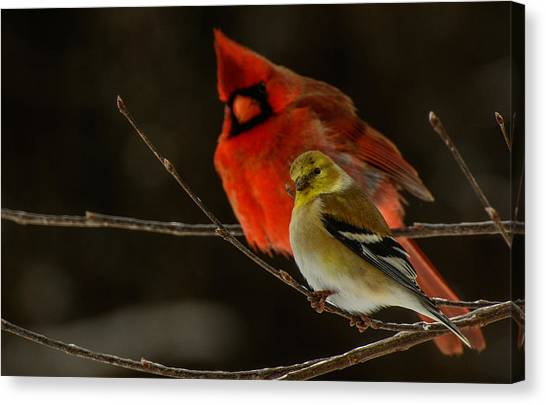 The Cardinal And The Goldfinch Canvas Print