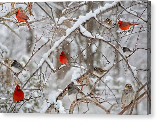Colorful On Canvas Print - The Cardinal Rules by Betsy Knapp