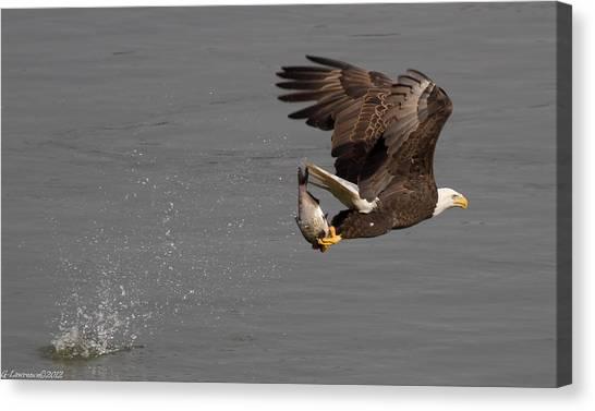 The Catch  Canvas Print by Glenn Lawrence