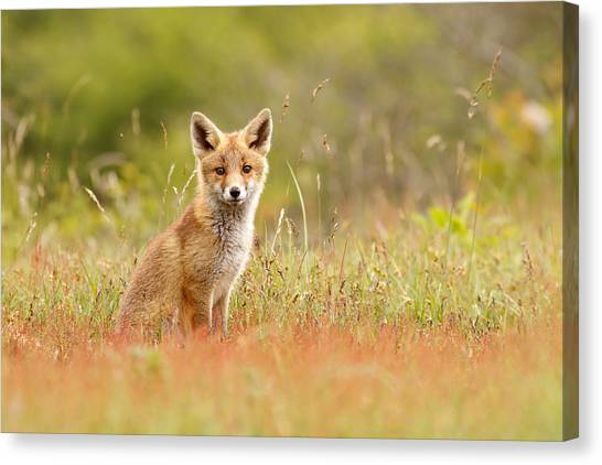 Carnivore Canvas Print - The Catcher In The Sorrel by Roeselien Raimond