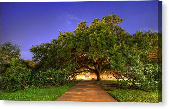 Texas A Canvas Print - The Century Tree by David Morefield