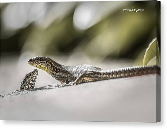 Canvas Print featuring the photograph The Charming Lizards by Stwayne Keubrick