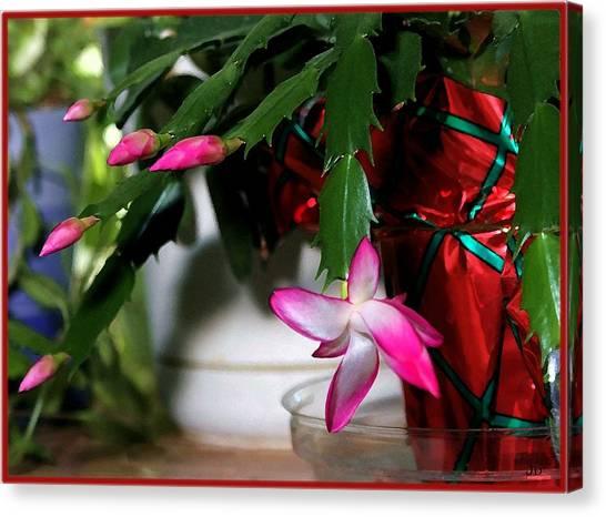 The Christmas Cactus Canvas Print by Jim  Darnall
