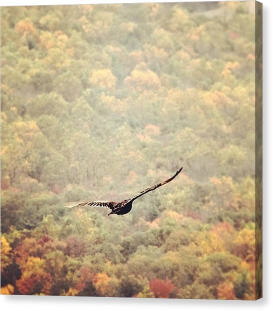 Appalachian Mountains Canvas Print - The Clearest Shot I Got Today On by Stephanie Tomlinson