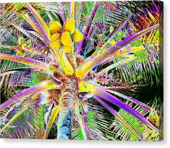 The Coconut Tree Canvas Print