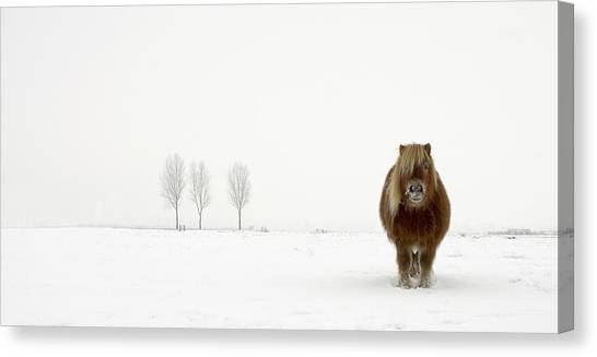 Winter Landscape Canvas Print - The Cold Pony by Gert Van Den