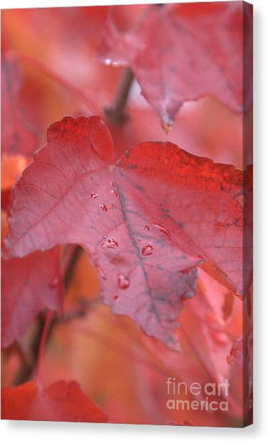 The Color Of Autumn Canvas Print
