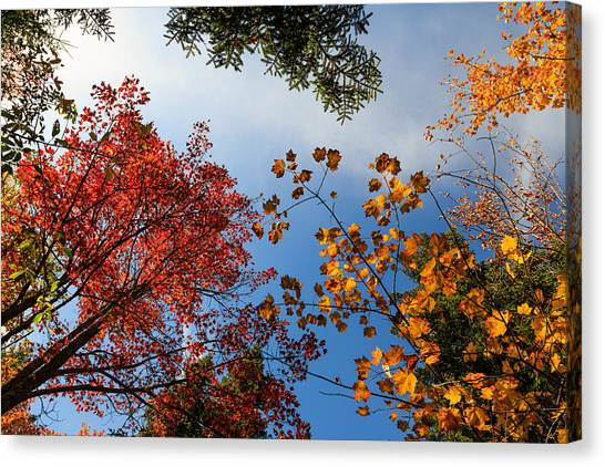 Looking Up Canvas Print by MaryGail Perkins
