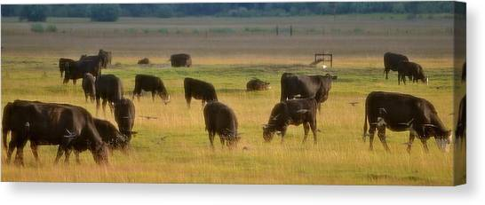 The Cows Won't Mind Canvas Print