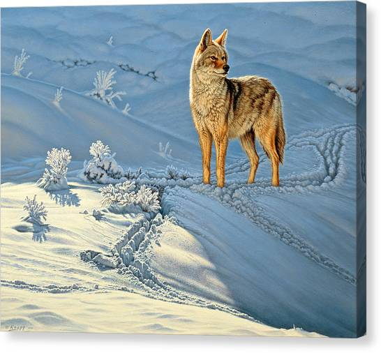Snow Canvas Print - the Coyote - God's Dog by Paul Krapf