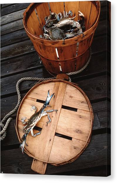 Bushel Basket Canvas Print - The Cranky Crab by Skip Willits