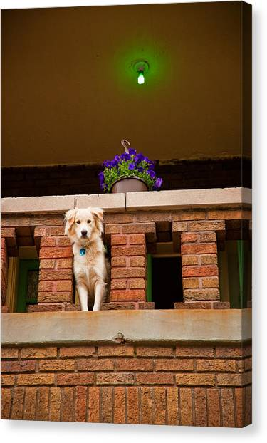 Canvas Print featuring the photograph The Critic by Kristi Swift