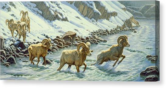 Yellowstone Canvas Print - The Crossing - Bighorn by Paul Krapf
