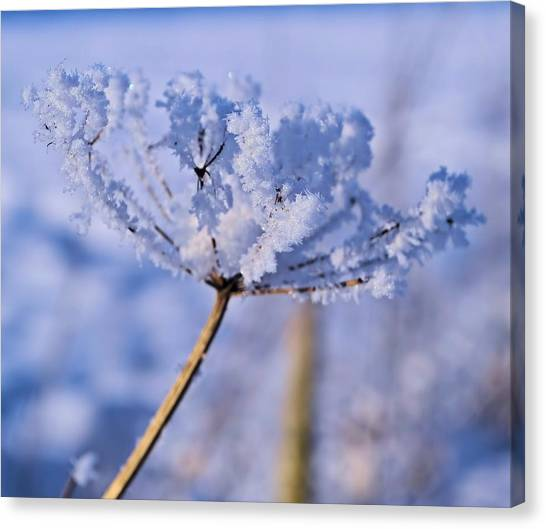 The Crystal Flower Canvas Print by Dave Woodbridge