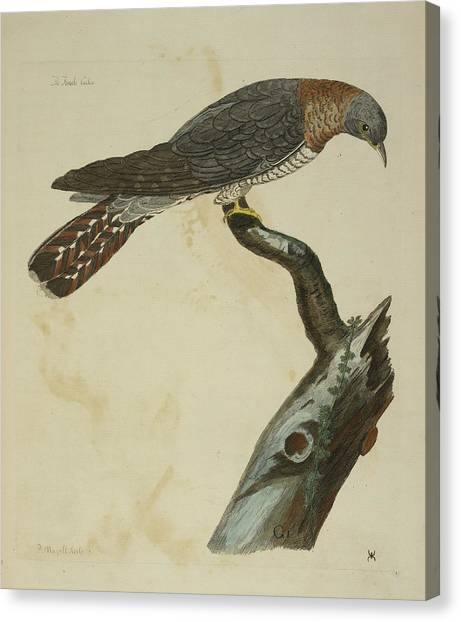 Cuckoos Canvas Print - The Cuckoo by British Library