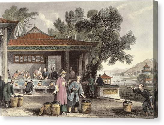 Oven Canvas Print - The Culture And Preparation Of Tea by Thomas Allom