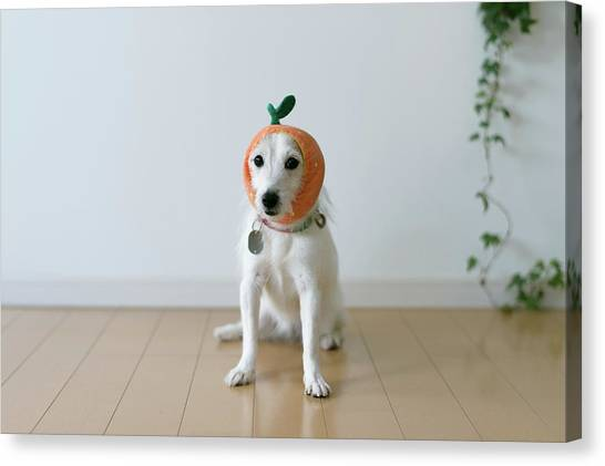 The Cute Dog With A Tangerine Cap Canvas Print by Hazelog