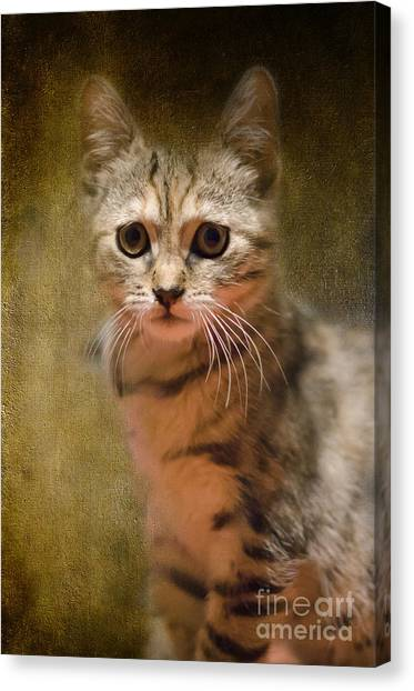 The Cutest Kitty Canvas Print