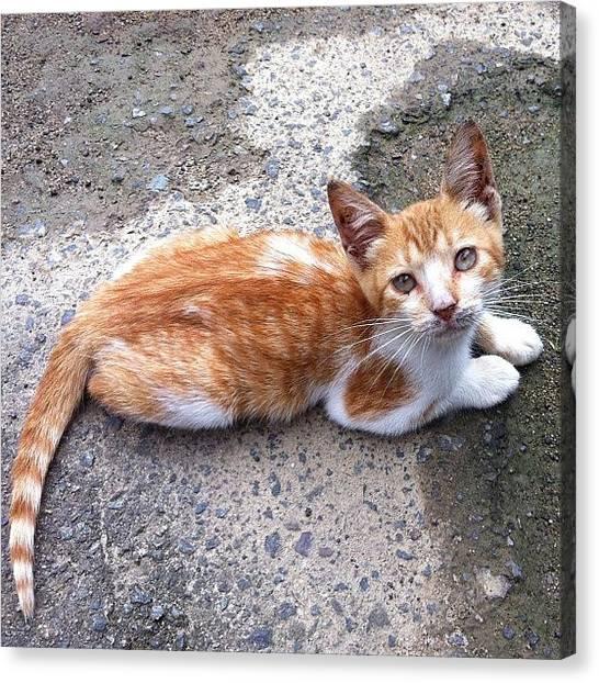 Spam Canvas Print - The Cutest Little Kitten!! <3 #like by Zoe Sutter