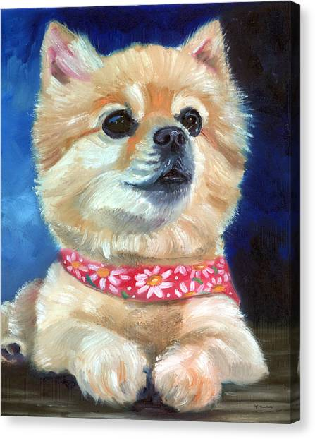 Pomeranians Canvas Print - The Daisy Scarf by Lyn Cook