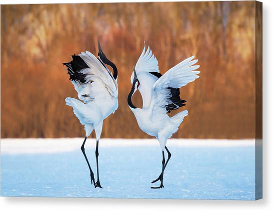 Cranes Canvas Print - The Dance Of Love by C. Mei