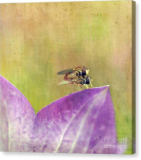 The Dance Of The Hoverfly Canvas Print