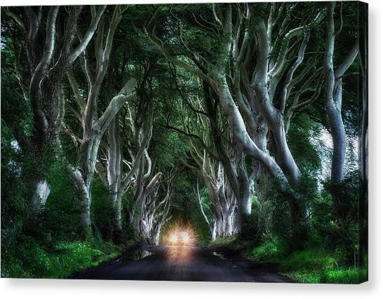 Tunnels Canvas Print - The Dark Hedges by Aida Ianeva