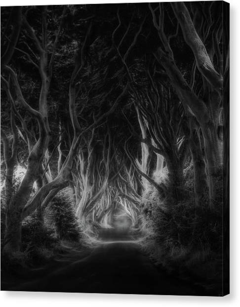 Ireland Canvas Print - The Dark Hedges by Saskia Dingemans