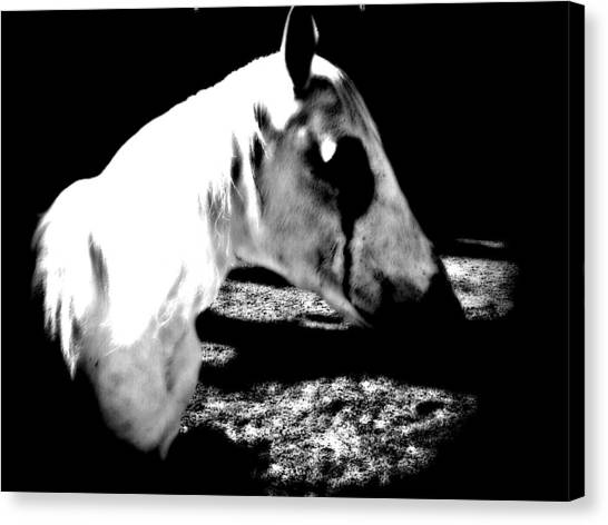 The Dark One Canvas Print by Chasity Johnson