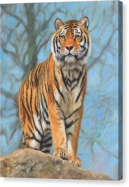 Siberian Canvas Print - The Dartmoor Tiger by David Stribbling