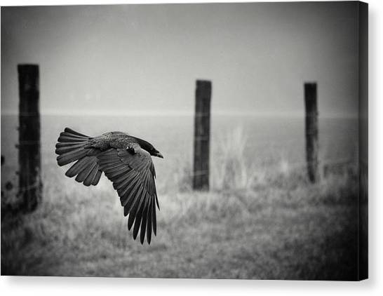 Crows Canvas Print - The Day Of The Raven by Holger Droste