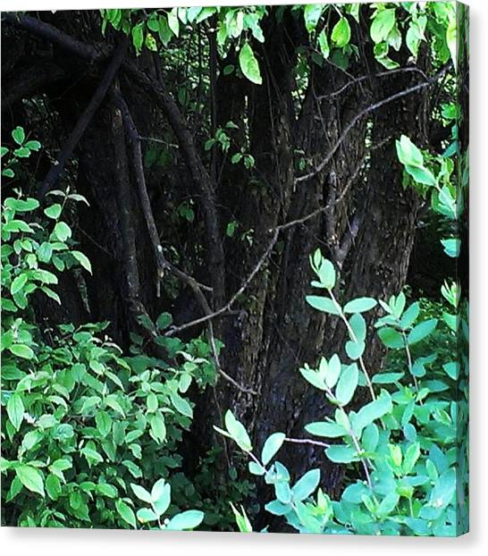 The Deep Dark Woods Canvas Print