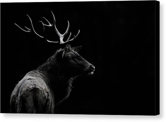 Antlers Canvas Print - The Deer Soul by Massimo Mei
